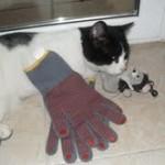 descargagat amb guants no mata rates