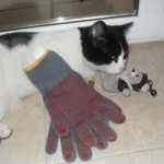 gat amb guants no mata rates