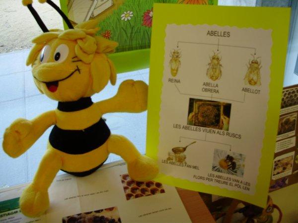 esquema-de-les-abelles-bloc-1.JPG