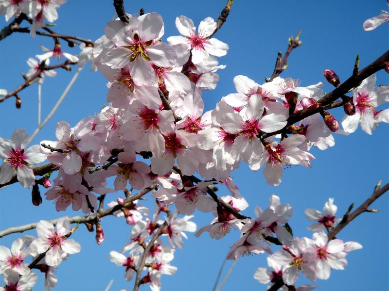 Resultat d'imatges de arbres florits