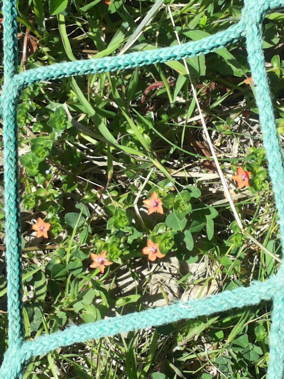 ESO12_5 flors al quadrat 25pètals