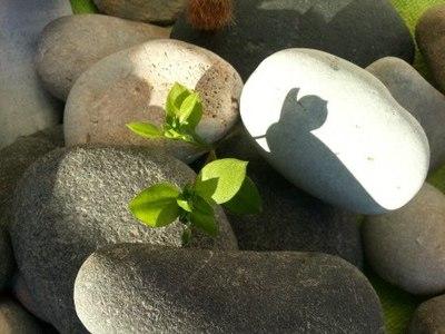 Implica't+ amb el teu entorn