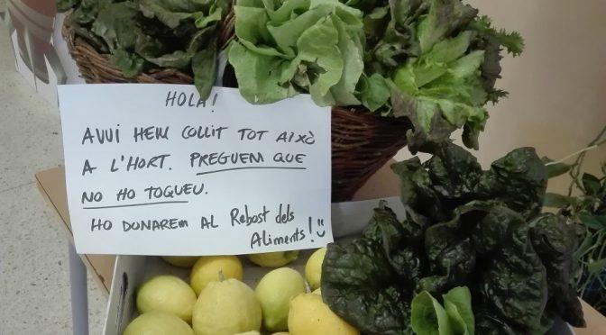 PRIMERA COLLITA DE L'HORT!