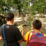 visita al zoo 1r C202
