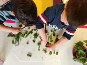 Dos infants experimentant amb una planta