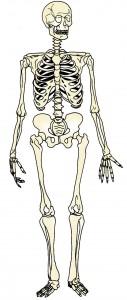 ossos cos humà