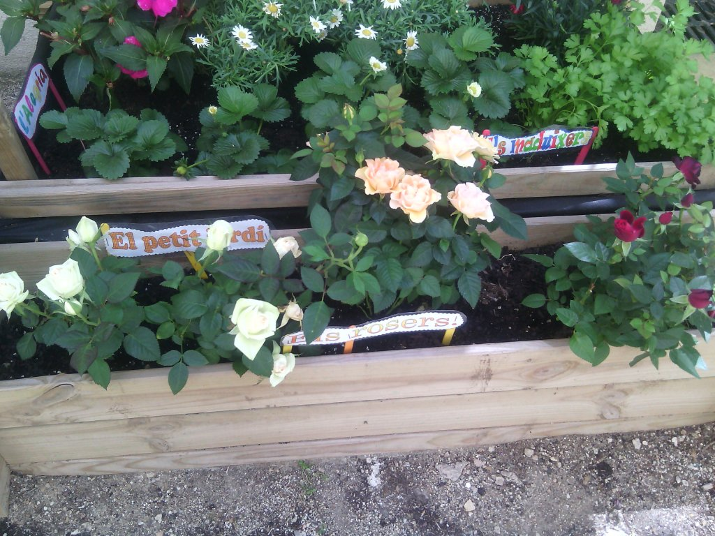 jardinet3
