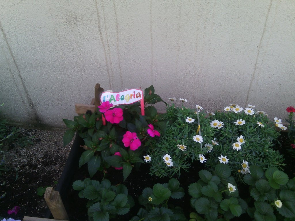 jardinet5