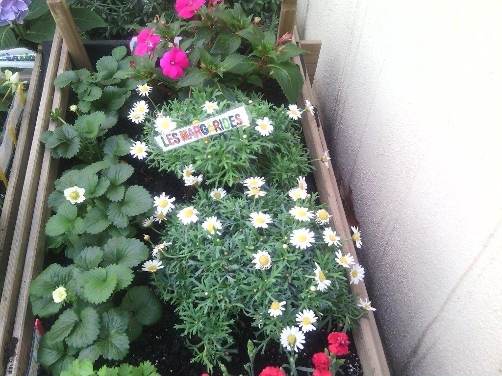 jardinet7