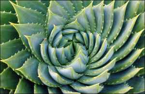 natutralesa fractal 4