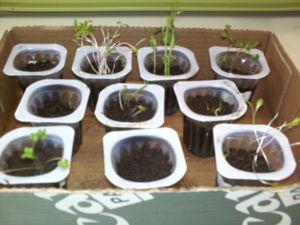 planter de tardor - hivern