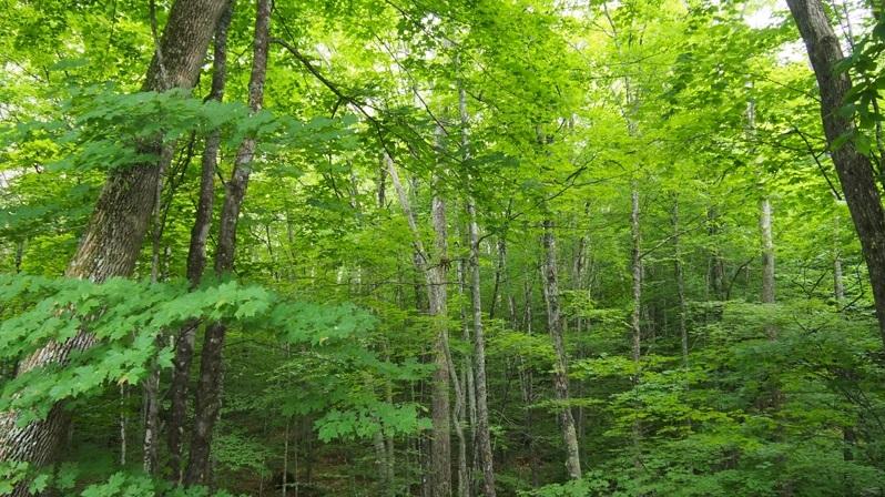 Bosc caducifoli
