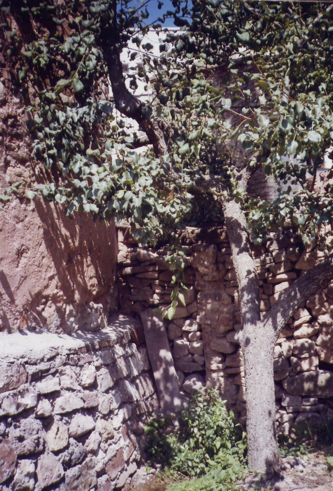 Imagen4