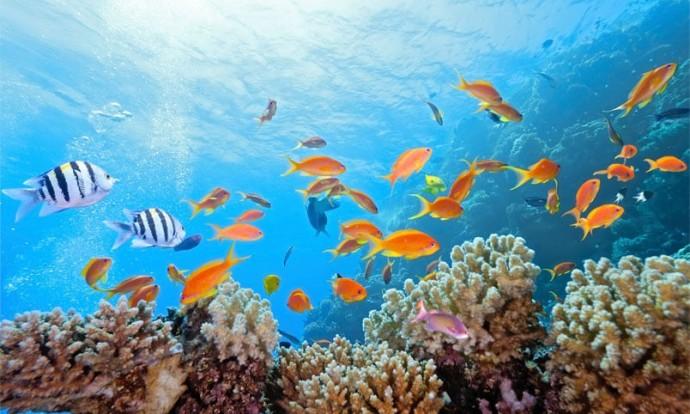 """Resultat d'imatges per a """"fons del mar"""""""