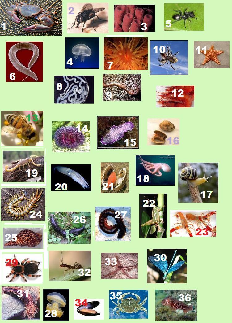 a que els animals i les plantes: