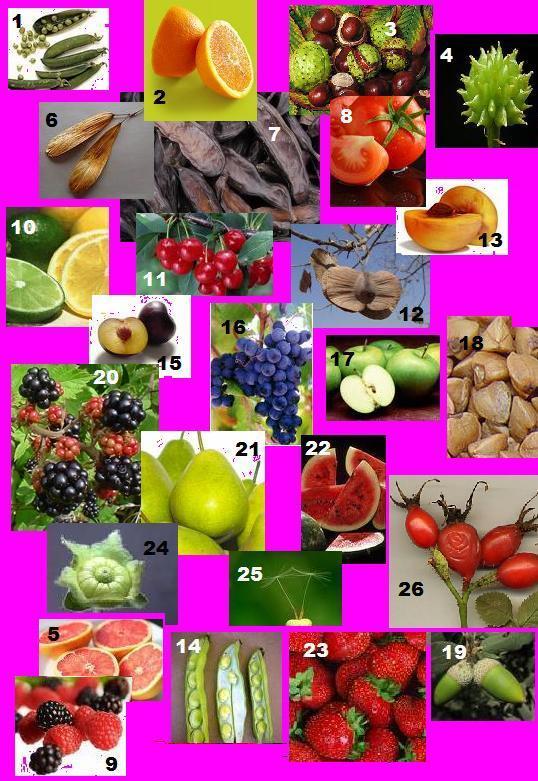 classificar-fruits.JPG