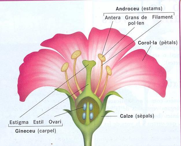 angiosperma-flor.jpg
