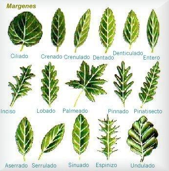 9 regne vegetal naturalsom for Tipos de arboles y su significado