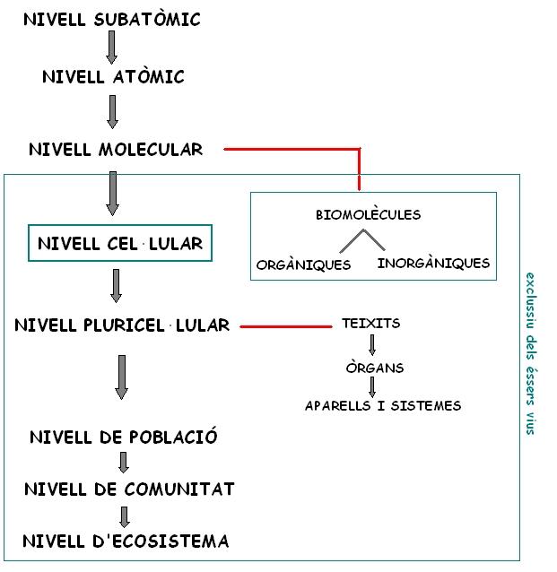 nivells-organitzacio-materia