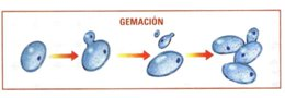 08-gemacio1