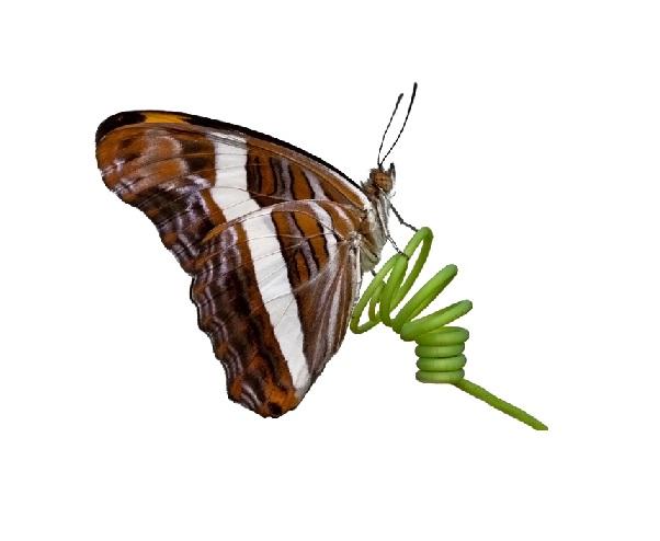 mariposaenmuellepequeña