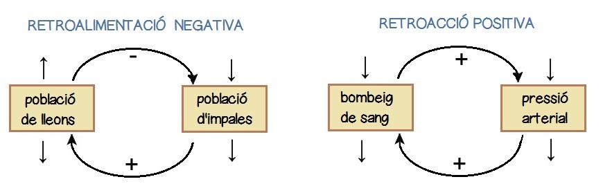 RETROALIMENTACIÓ