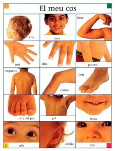 parts del cos