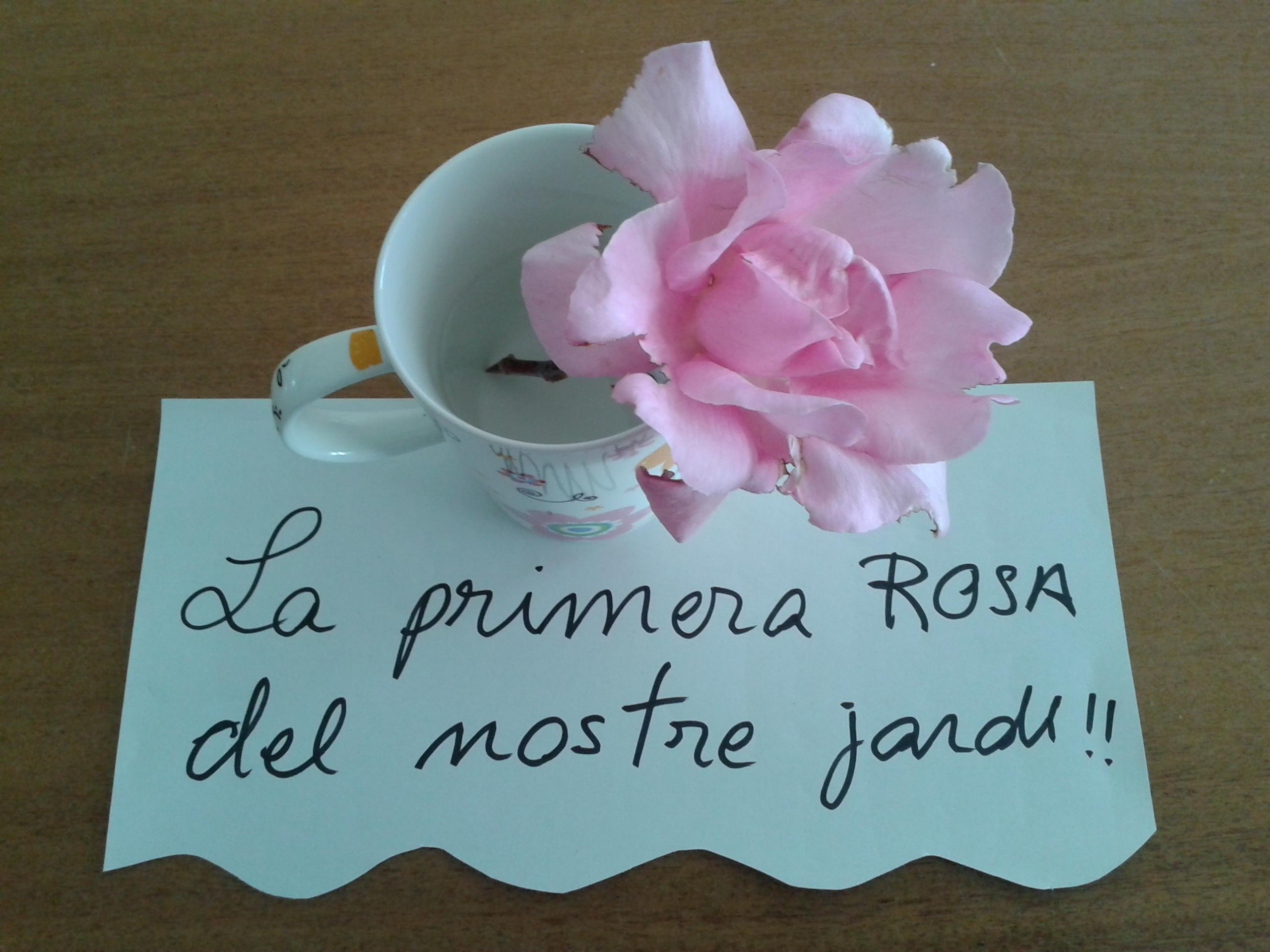 la nostra primera rosa