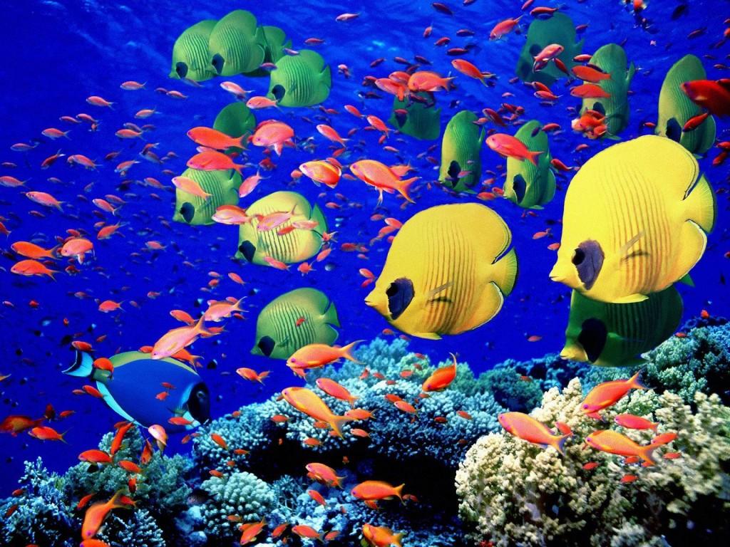 fotos-peces-de-colores-globo