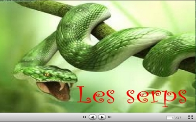 serps