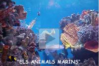 animals-marins