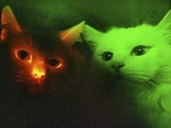 gatos-reuters.jpg