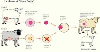 dolly350.jpg