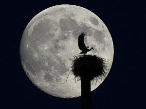....tocada por la luna3