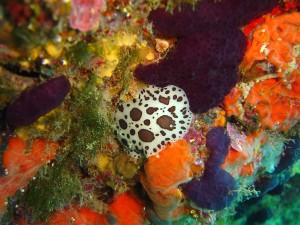 El fons marí de les Medes és fantàstic!
