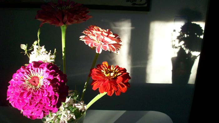 flors-petit.jpg