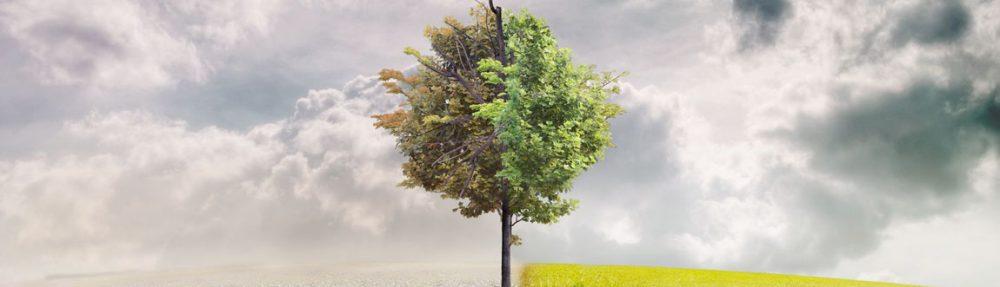 Projecte de primer: el canvi climàtic