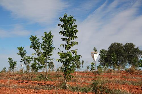 arbresplantats_estopa_500.jpg