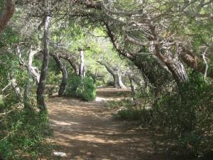Platja llarga: bosc de la marquesa