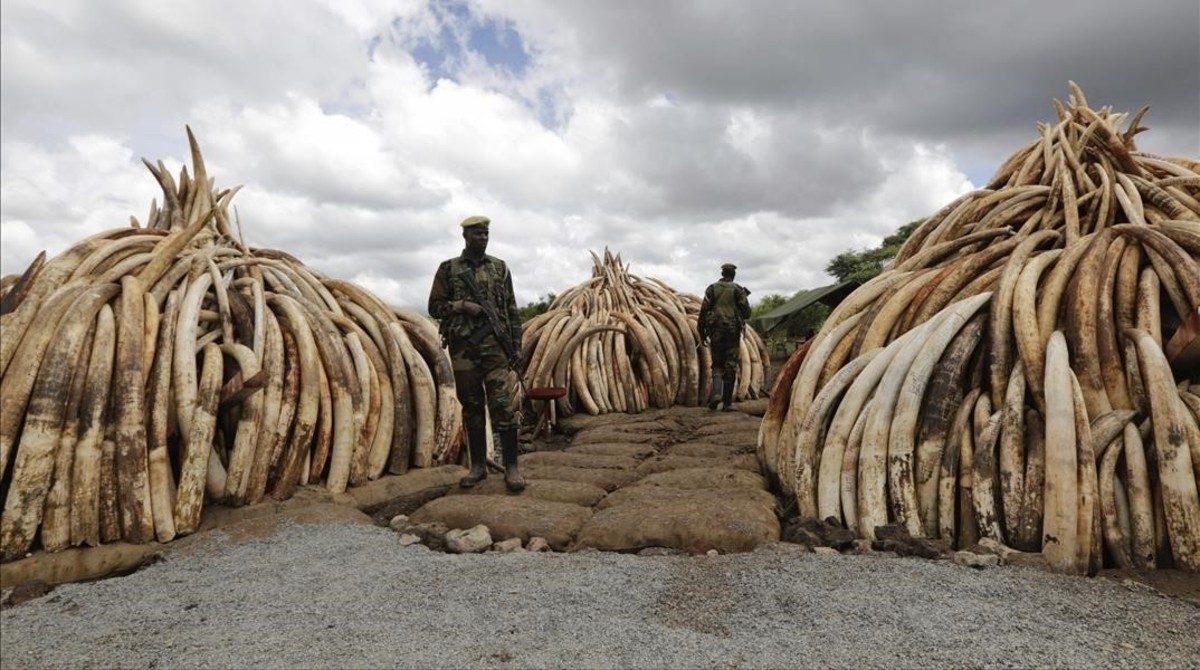 Projecte Salvem els Elefants