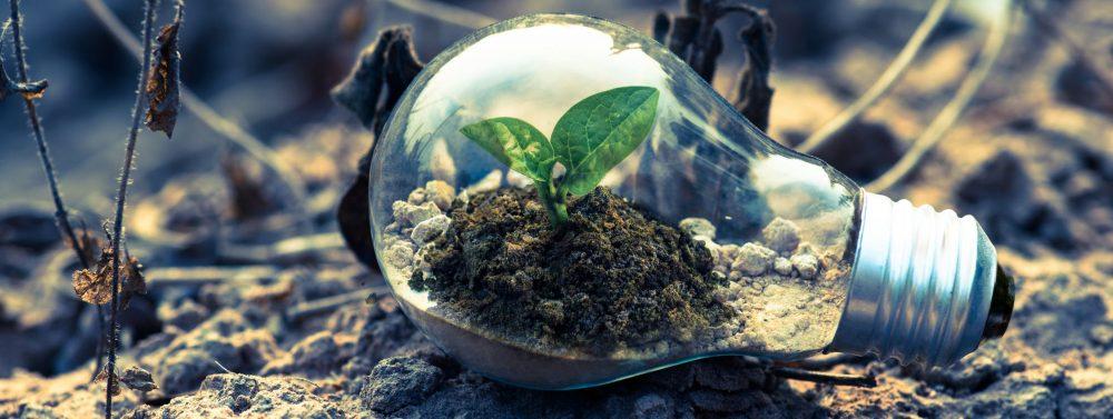Educació ambiental a les aules