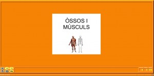 Osso i músculs