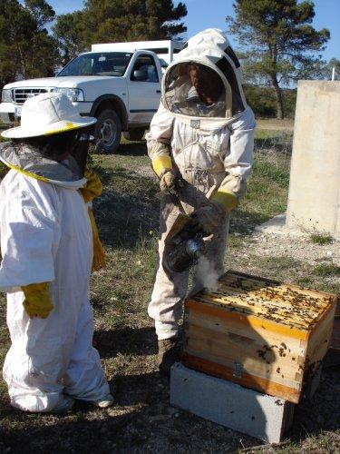 apicultura2.jpg
