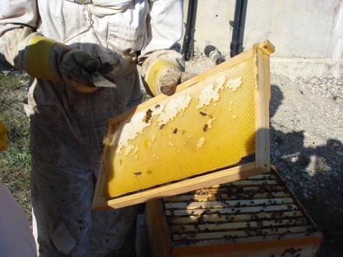 apicultura3.jpg
