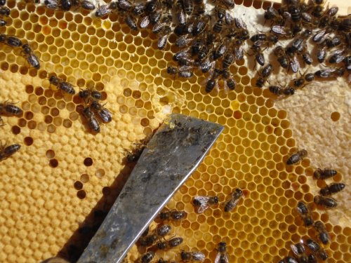 apicultura4.jpg