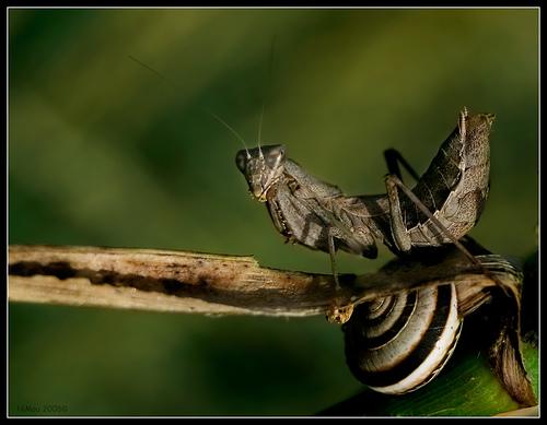 mantis-al-riu-francoli.jpg
