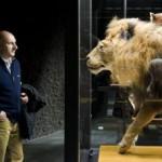 leon_disecado_nuevo_museo_ciencias_naturales_barcelona
