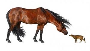 Un cavall 'Sifrhippus', que va arribar a ser tan petit com un gat i a pesar menys de quatre quilos, al costat d'un cavall Morgan d'1,52 metres d'altura i 453 quilos de pes, segons un estudi divulgat per la revista 'Science'. DANIELLE BYERLEY   EFE