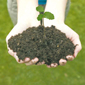 plantada_arbres2