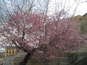 Primavera-  Zaira